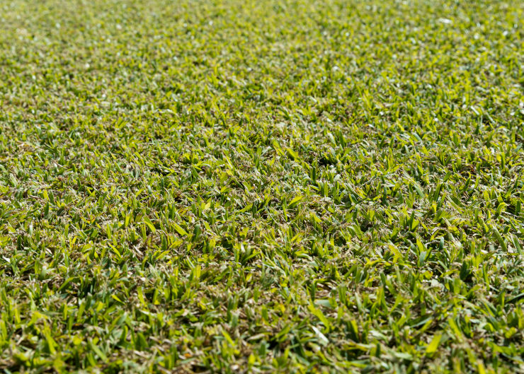 Palmetto Cover - WestTurf